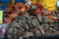 Краб моря Стоковое Изображение RF