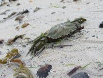 Краб на песке Стоковое Фото