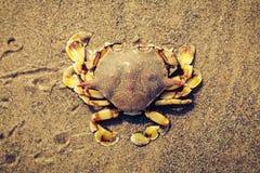 Краб на тоне разделенном песком Стоковое Изображение