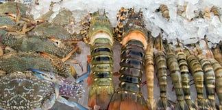 Краб омара, креветка, продукт моря Стоковая Фотография