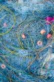 Краб рыболова голубой сетчатый Стоковое Фото