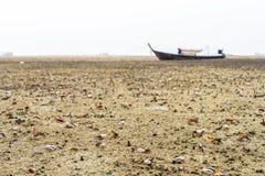 Краб скрипача идя в мангрову в Таиланде Стоковые Изображения