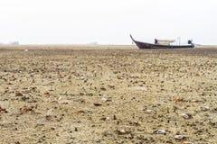 Краб скрипача идя в мангрову в Таиланде Стоковые Фото
