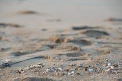 Краб солдата приходит из раковины, вдоль предпосылки пляжа стоковые изображения