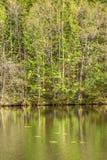 Край воды на озере стоковое изображение