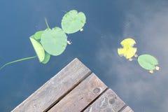 Край деревянной пристани и лилий воды на озере стоковое изображение
