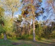 Край леса весны в солнце вечера стоковые фотографии rf