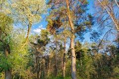 Край леса весны в солнце вечера стоковые изображения rf