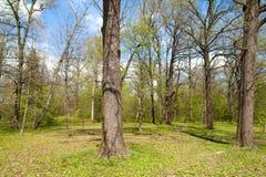 Край леса весны стоковые фотографии rf
