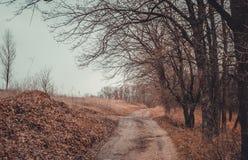 Край леса в предыдущей весне стоковая фотография