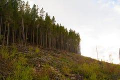 Край леса отрезанного вниз Стоковые Фото