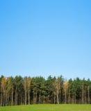 Край леса стоковые фото