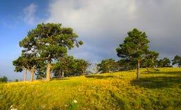 Край леса Стоковая Фотография RF