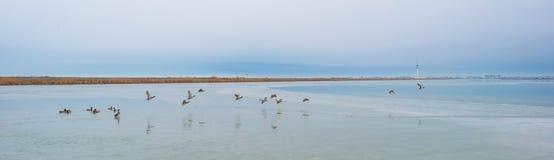 Край замороженного озера вдоль dike в зиме стоковые фото