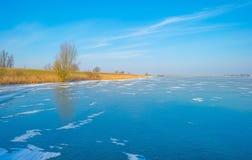 Край замороженного пруда в солнечном свете в зиме стоковое фото rf