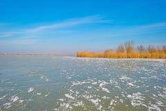Край замороженного пруда в солнечном свете в зиме стоковое изображение