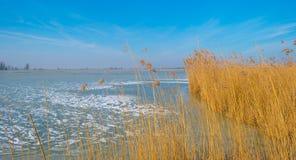 Край замороженного пруда в солнечном свете в зиме стоковая фотография