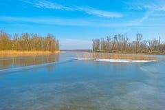 Край замороженного пруда в солнечном свете в зиме стоковое изображение rf