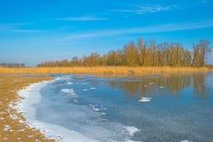 Край замороженного пруда в солнечном свете в зиме стоковая фотография rf