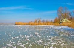 Край замороженного пруда в солнечном свете в зиме стоковые изображения rf