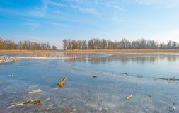 Край замороженного пруда в солнечном свете в зиме стоковое фото