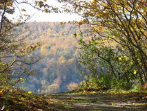 Край листвы осени скалы горы обозревая стоковые фото
