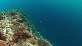 Край кораллового рифа 4K сток-видео