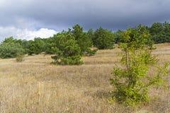 Край леса Крыма горы стоковые фотографии rf