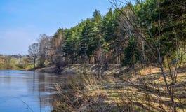 Край леса на банках реки Kotorosl, зоны Yaroslavl стоковые изображения