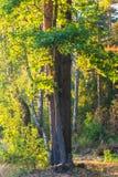 Край леса осени в лучах заходящего солнца стоковое изображение rf
