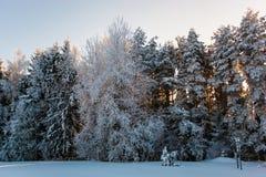 Край леса покрытый со снегом после тяжелой вьюги стоковое изображение