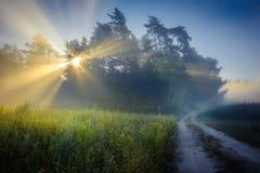 Край леса покрыт с туманом утра стоковые изображения