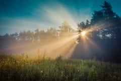 Край леса покрыт с туманом утра стоковое изображение rf