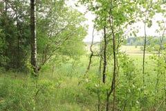 Край леса стоковое изображение rf