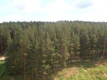 Край леса стоковые изображения rf