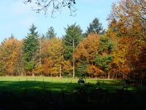 Край леса Autums тепло освещенный низким солнцем стоковое фото rf