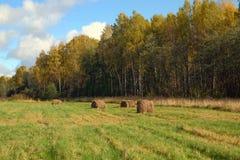 Край лиственного леса стоковые изображения rf