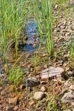 Край озера стоковое изображение rf