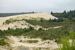 Край песчанной дюны Орегона стоковое фото rf