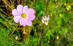 Край поля с разнообразными цветками от конца Стоковая Фотография RF