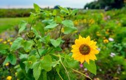 Край поля с разнообразными цветками от конца Стоковое Фото