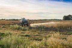 Край deccication поля картошки семени с одним spr деятельности Стоковое Изображение RF