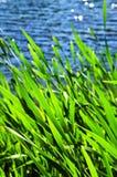 край reeds вода Стоковые Фотографии RF