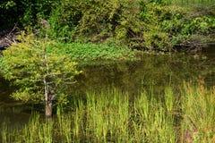 Край s воды `` Стоковое Изображение RF