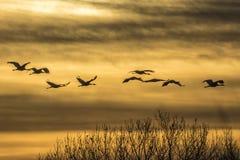 Краны & заход солнца Стоковая Фотография RF