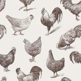 Краны и курицы иллюстрация вектора