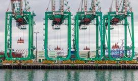 Краны контейнера Вечнозелёного растения Морск Корпорации на порте Ang Лос Стоковые Изображения