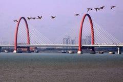 Краны рассвета летают Река Qiantang стоковое изображение