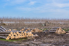 Краны для журналов и woodpiles Стоковые Изображения RF