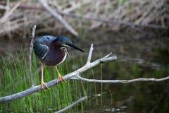 Кран в святилище птиц в Индии Стоковое Изображение RF